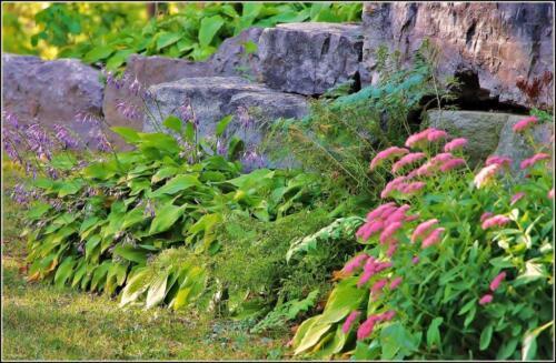 Retaining Wall Planting 7 7 6 20 James Hamilton  Pictorial Gold