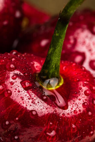 Sweet Cherry 9 7.5 7 23.5 GPP Geoffrey Skirrow  Pictorial Gold