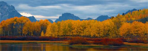 Autumn Splendor 8 7 8.5 23.5 Leonie Holmes FCAPA  Pictorial Master