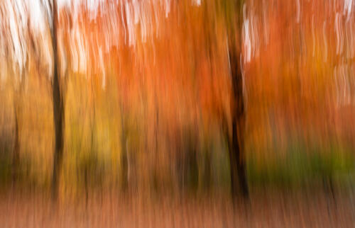 Westfield Village Autumn Trees 7 7 7 21 David Evans  Creative Gold