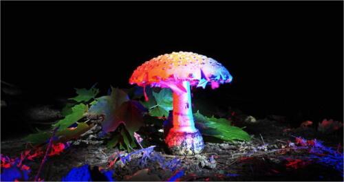 Light Painted Mushroom 7 8.5 6.5 22 Dan Copeland  Creative Master