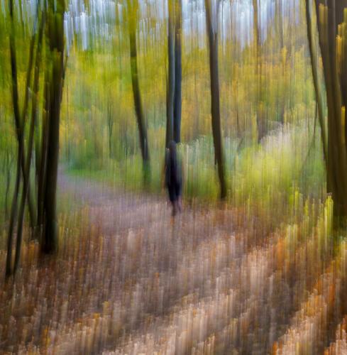 Fall Path At Dundas Valley 7 6.5 7.5 21 Andy Langs  Creative Gold