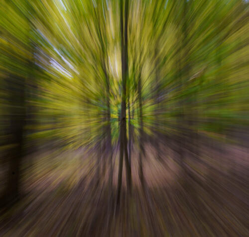 Trees At Warp Speed 6 6.5 7 19.5 Andy Langs  Creative Gold