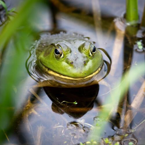 Bullfrog 7 7 7.5 21.5 Mike Mulvale  Nature Silver