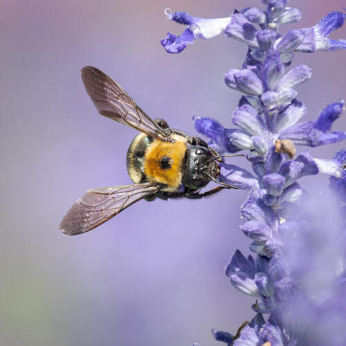 Bumble Bee 7 7 7.5 21.5 Mike Mulvale  Nature Silver