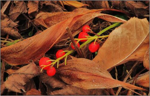 Lilly Of The Valley Berries 7 6.5 6.5 20 James Hamilton  Pictorial Gold