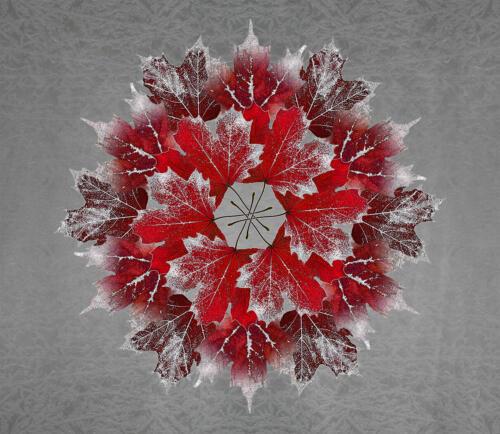 Autumn Maple Fantasy 7.5 8 7 22.5 Doug Doede  Creative Master