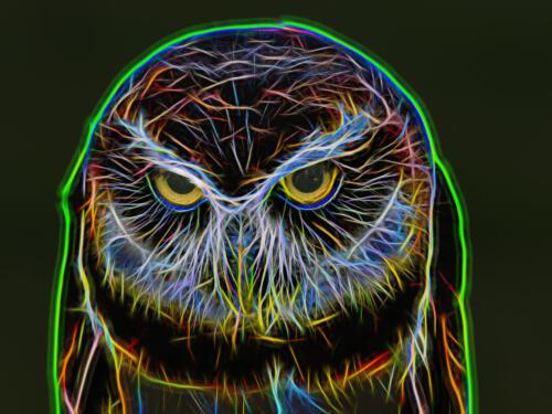 Neon Owl 7 7.5 7 21.5 Don Poulton  Creative Master