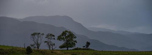 Scotch Mist 6 7.5 7.5 21 Bill Waddell  Pictorial Silver