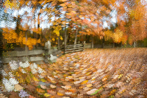 Swirling Leaves 7 7 7 21 David Evans  Creative Gold