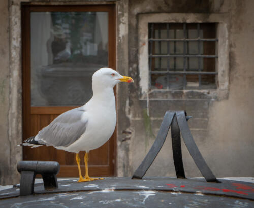 Gull With Self-Portrait 6.5 7 7 20.5 Patrick Mohide  Pictorial Gold