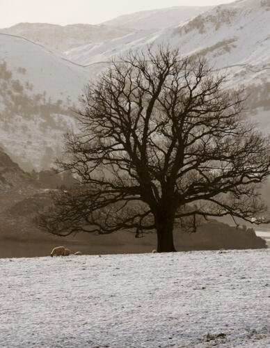 Winter On The Fells  7 7.5 6 20.5 Malcolm Stagg  Pictorial Silver