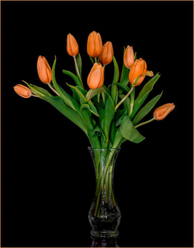 Soon There Will Be Tulips 8.5 8.5 8.5 25.5 TC DP Kathryn Martin  Pictorial Master