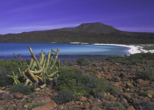 Beach And Cactus Baja Mexico 7.5 7 7.5 22 David Seldon  Pictorial Master