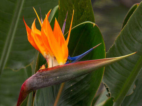 Bird Of Paradise 7 7 6.5 20.5 Terry Ross-Poulton  Pictorial Gold