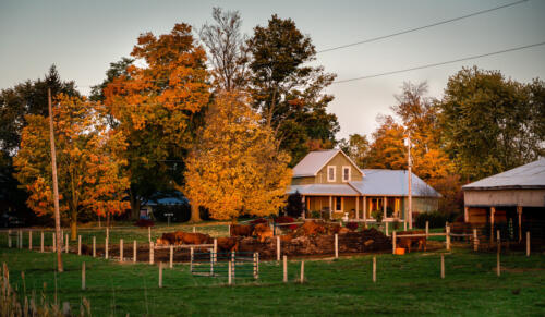 Early Morning On The Farm 7.5 7 6.5 21 Patrick Mohide  Pictorial Gold