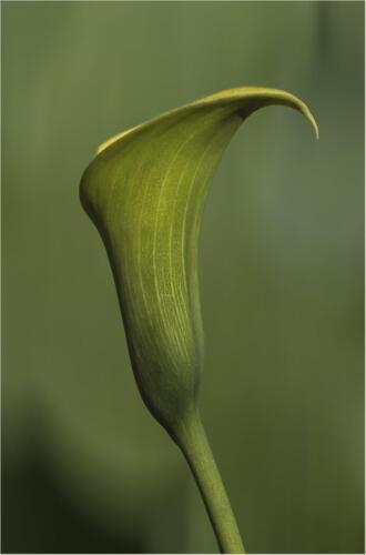 Green On Green 7.5 7 8.5 23 GPP Elzbieta Piskorz  Pictorial Gold