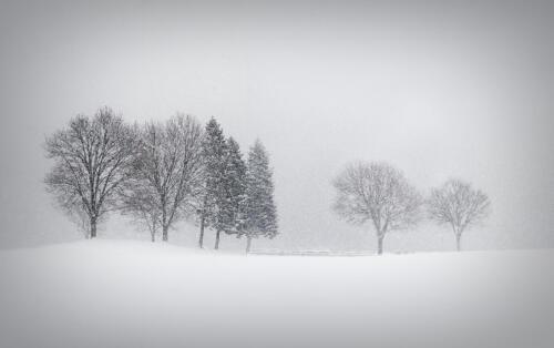 Let It Snow 8 7.5 8 23.5 GPP Elzbieta Piskorz  Pictorial Gold