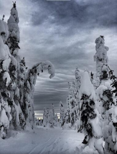 Ghost Trees 7.5 6.5 6.5 20.5 Ewa Rakowski  Pictorial Silver