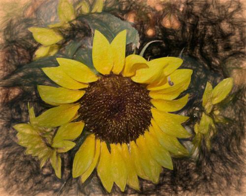 Sunflower 8 7 6.5 21.5 Leonie Holmes FCAPA  Creative Master