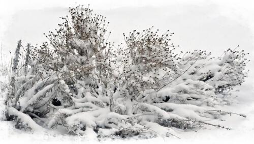 Snowy Day 7.5 7.5 6 21 Leonie Holmes FCAPA  Pictorial Master