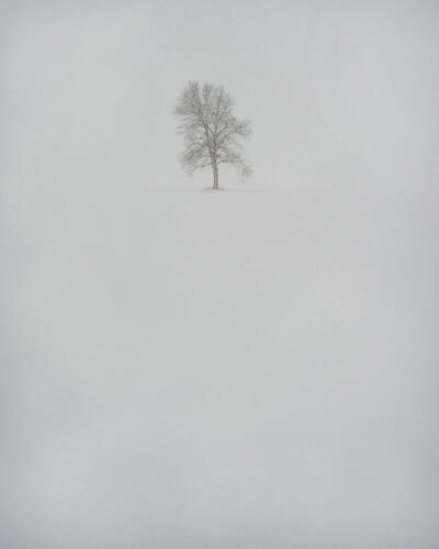 Tree In Snow Storm 7 7.5 6.5 21 Carey Hope  Pictorial Silver