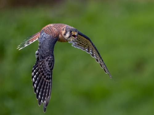 CAPA - 2020 - Birds in Flight