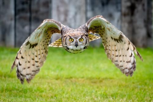 Owl 23 HM BPP Mike Mulvale  Pictorial Bronze