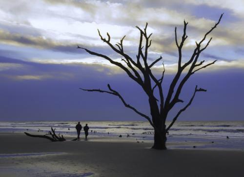 Bare Bones Beach Botany Bay 18.5 Judy Boufford  Pictorial Gold