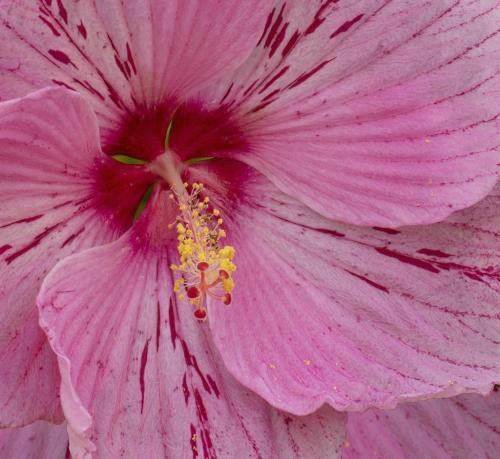 Pink Flower 22.5 Elzbieta Piskorz  Pictorial Gold