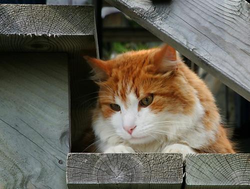 Kitty Cat 22.5 Graham Jardine  Pictorial Gold