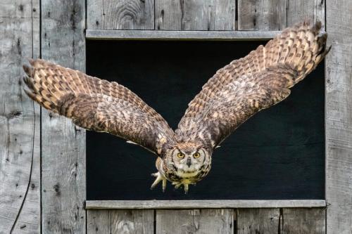 Owl 22.5 BPP Mike Mulvale  Pictorial Bronze