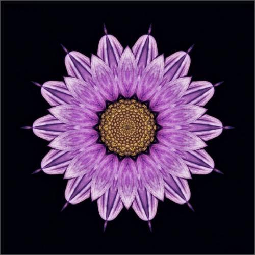 Purple Gerbera 23.5 SPP Claudia Povilauskas  Creative Silver