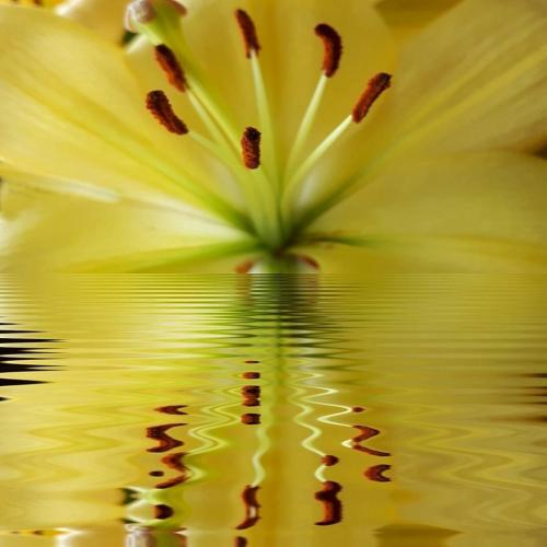 Reflection 18.5 John Bunyon  Creative Silver