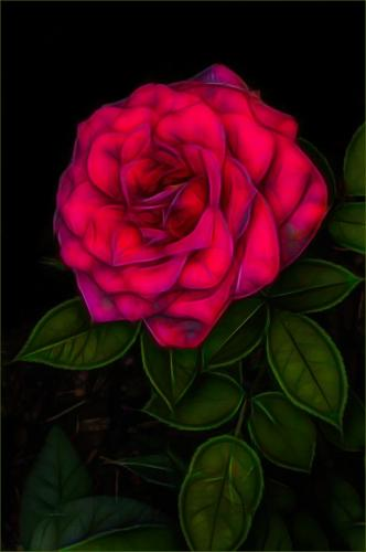 A Rose  23  Creative  Gold  Kathy  Ward  The rose is generally well exposed, although the reds seem a little oversaturated. The rose is well positioned in the frame, perhaps a little more room on the sides and bottom would avoid the mergers of some leaves with the edges of the frame. Good use of a green border.