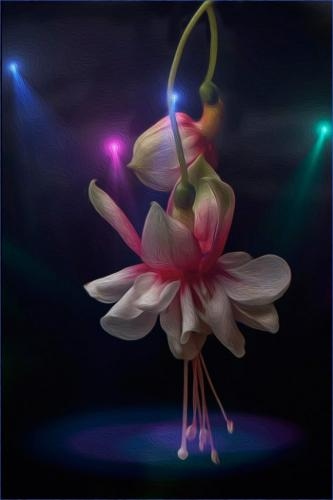Fuchsia in the Spotlight  25.5  Creative  Gold  Kathy  Ward