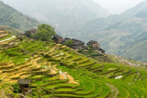Longi Rice Terraces China  22  Pictorial  Gold  Bert2nd  Francous