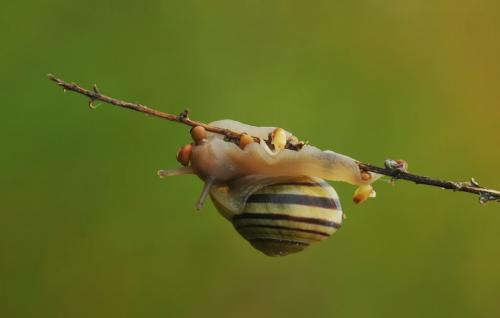 Snail Laying Eggs  23.5  Nature  Master  Heather  Engel