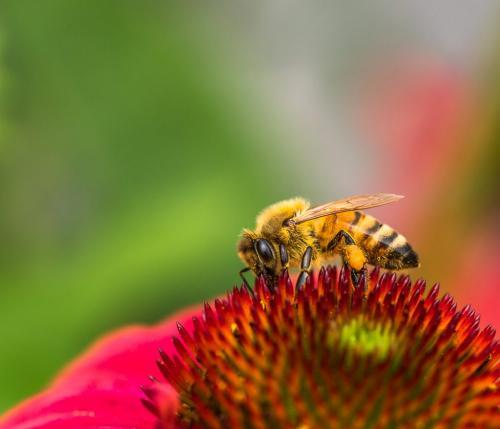 Honey Bee  23  Nature  Gold  Bertin  Francoeur