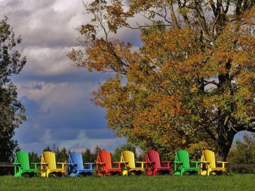 Fall Colours  21  Pictorial  Gold  James  Hamilton