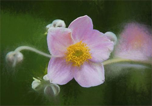 Pastel Pink  21.5  Creative  Gold  Leonie  Holmes
