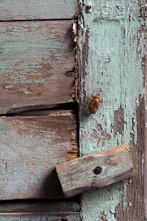 Bug on Old Wood  20.5  Pictorial  Gold  Graham  Jardine