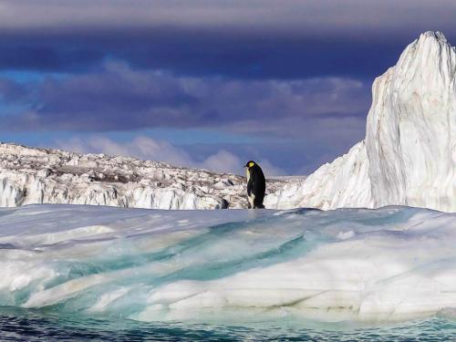 Emperor Penguin  20.5  Nature  Silver  John  Lamont  Over sharpened