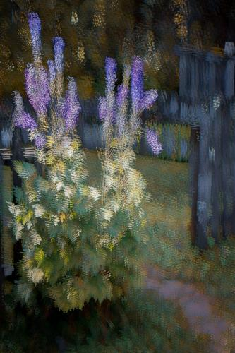 in camera delphinium abstract  22  Creative  Gold  Kathryn  Martin