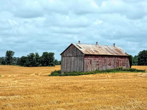 Another Abandoned Barn  20  Pictorial  Gold  Robert  Melnyk