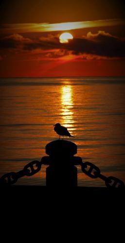 Seagal At Sun Rise 7 7.5 5 19.5 Marino Favretto  Nature Bronze