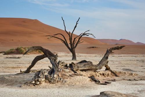 Petrified Tree, Namib 7.5 8 7 22.5 SPP Chris Vermaak  Nature Silver