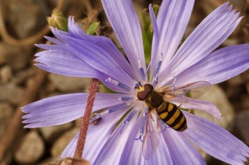 Bee_On_Flower 7.5 6.5 5.5 19.5 Caroline Way  Pictorial Bronze