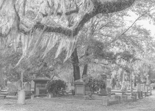 1850 South Carolina Cemetery 7.5 7.5 8 23 GPP Judy Boufford  Pictorial Gold