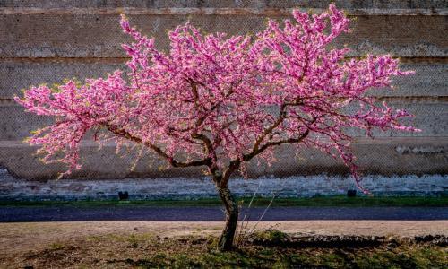 Full Bloom 6 7 8 21 Patrick Mohide  Pictorial Gold